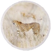 A Pair Of Cheetahs Move Steathily Through The Long Grass Of The  Round Beach Towel