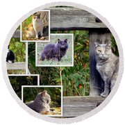 A Variety Of Cats Round Beach Towel