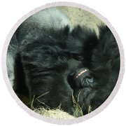 Adult Silverback Gorilla Laying Down With Anguished Expression Round Beach Towel