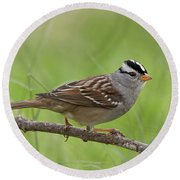 adult White-crowned Sparrow Round Beach Towel