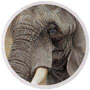 African Elephant Round Beach Towel by Alan M Hunt