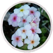 Alpine Rockjasmine Up Close Round Beach Towel