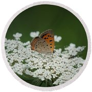 American Copper On Queen Anne's Lace Round Beach Towel