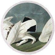 American Ptarmigan, Tetrao Mutus, White Tailed Grous, Tetrao Leucurus Round Beach Towel