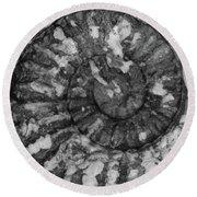 Ammonite Fossil Bw Round Beach Towel