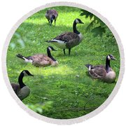 An Afternoon With Canada Geese Round Beach Towel