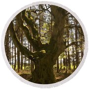 ancient tree in forest near Greenlawin Scottish Borders Round Beach Towel