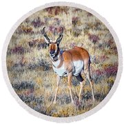 Antelope Buck 2 Round Beach Towel