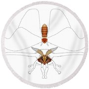 Atlas Moth1 Round Beach Towel