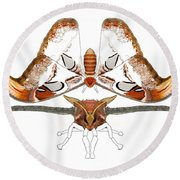 Atlas Moth2 Round Beach Towel