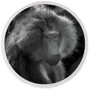 Baboon Black And White Round Beach Towel