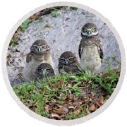 Baby Burrowing Owls Posing Round Beach Towel