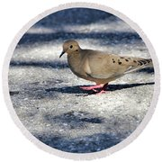 Baby Mourning Dove Round Beach Towel