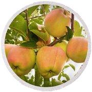 Backyard Garden Series - Apples In Apple Tree Round Beach Towel