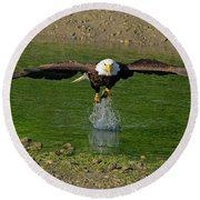Bald Eagle Catching A Fish Round Beach Towel