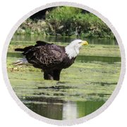 Bald Eagle's Look Round Beach Towel