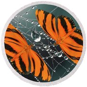 Banded Orange Butterfly. Round Beach Towel