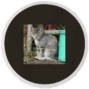 Barn Cat Round Beach Towel by Ann E Robson
