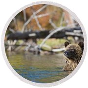 Bathing Blonde Grizzly Round Beach Towel