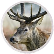 Beautiful Red Deer Stag Cervus Elaphus With Majestic Antelrs In  Round Beach Towel