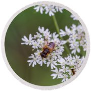Bee Relaxing On A Flower. Round Beach Towel