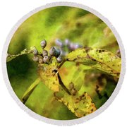 Berries And Aging Leaves 5709 Idp_2 Round Beach Towel