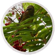 Berries And Waxwing Round Beach Towel