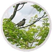 Bird Resting On Branch Round Beach Towel
