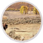 Bison And Cottonwoods Round Beach Towel