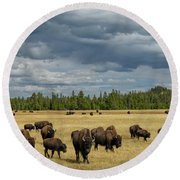 Bison In Yellowstone Round Beach Towel