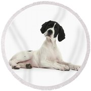 Black-and-white Pointer Pup Round Beach Towel
