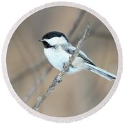 Black-capped Chickadee In Spring Round Beach Towel