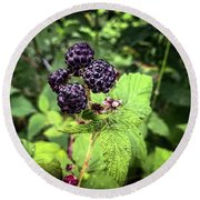 Black Raspberries  Round Beach Towel