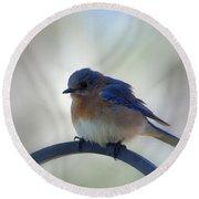 Bluebird Fluff Round Beach Towel