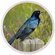 Boat Tailed Grackle Round Beach Towel