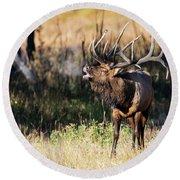 Bull Elk 3068 Round Beach Towel