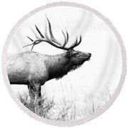 Bull Elk In Rut Round Beach Towel