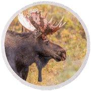 Bull Moose In Fall Colors Round Beach Towel