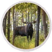 Bull Moose In Fall Forest Round Beach Towel