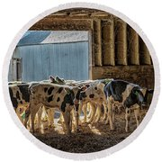 Calves Round Beach Towel