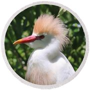 Cattle Egret Profile Round Beach Towel