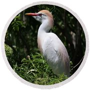 Cattle Egret With Breeding Feathers Round Beach Towel