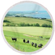 cattle in field and east coast Berwickshire Round Beach Towel