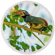 Chestnut-eared Araacari Round Beach Towel