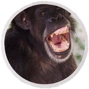 Chimp With Mouth Open Round Beach Towel