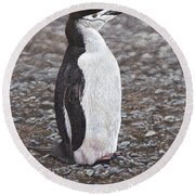 Chinstrap Penguin Portrait By Alan M Hunt Round Beach Towel by Alan M Hunt