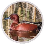 Cinnamon Teal On The Pond Round Beach Towel