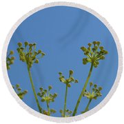 Close Up Of Fennel Flowers. On Sky Background Round Beach Towel