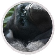 Close-up Shot Of Silverback Gorilla Making An Angry Face Round Beach Towel