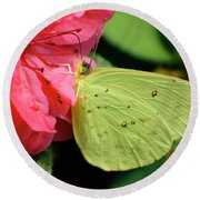 Cloudless Sulphur Round Beach Towel